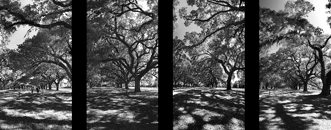 2018 Charleston Polyptique Arbres Boone Hall.jpg
